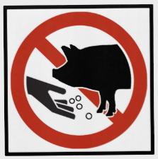 perolas_porcos